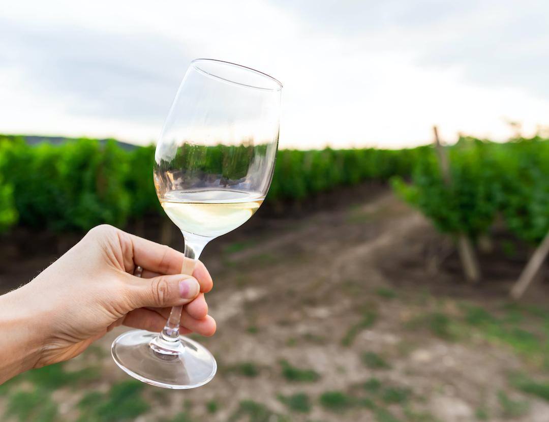 alternatywy dla chardonnay na polu winnic