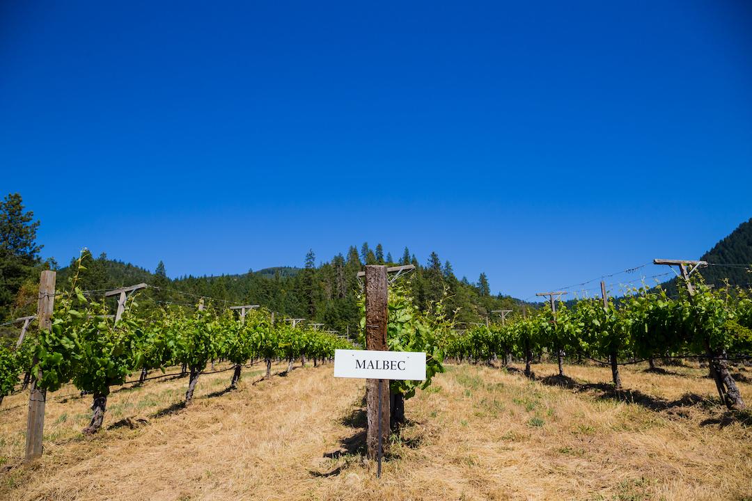 uprawy winnice