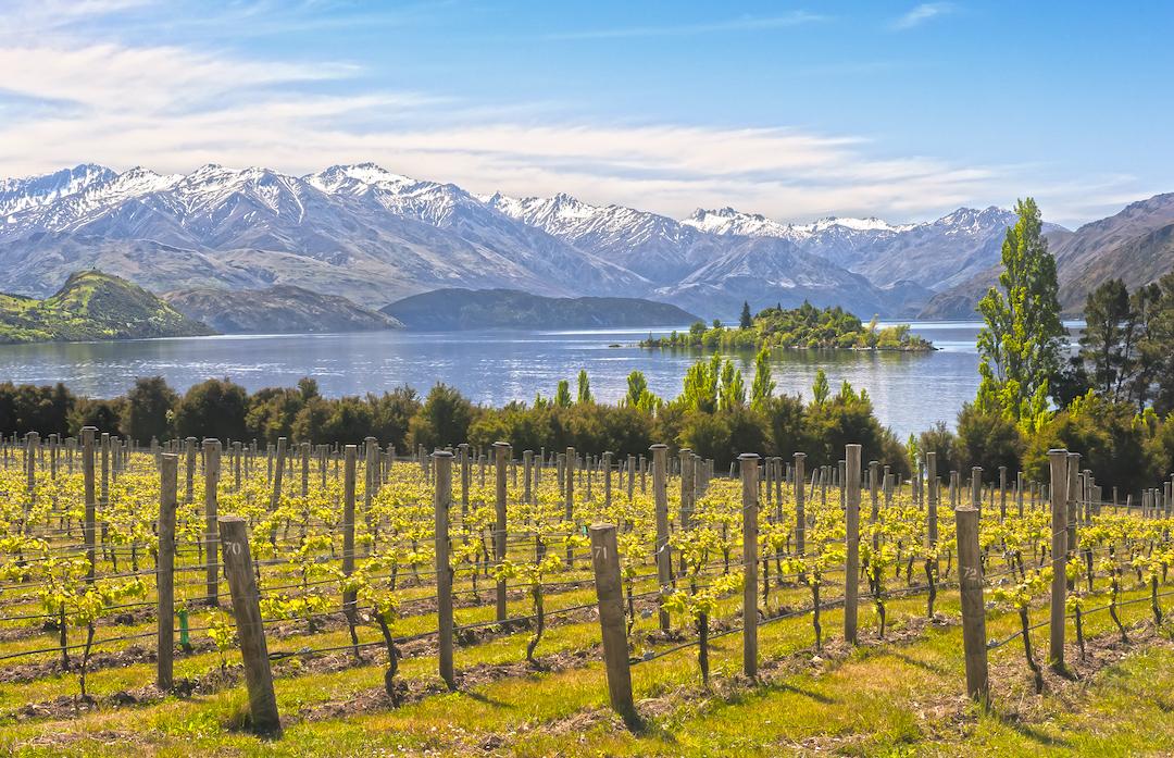 winnica w nowej zelandii