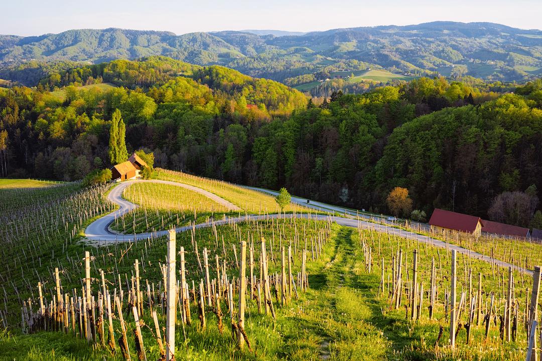 pola uprawy win w słowenii