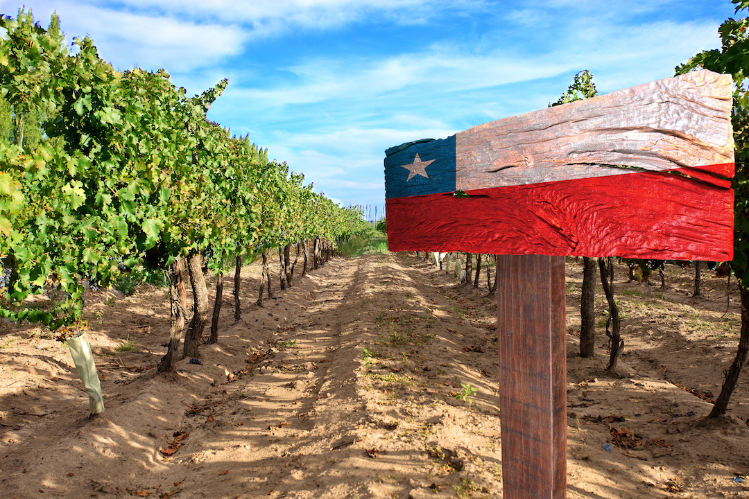 uprawy winnic w chile