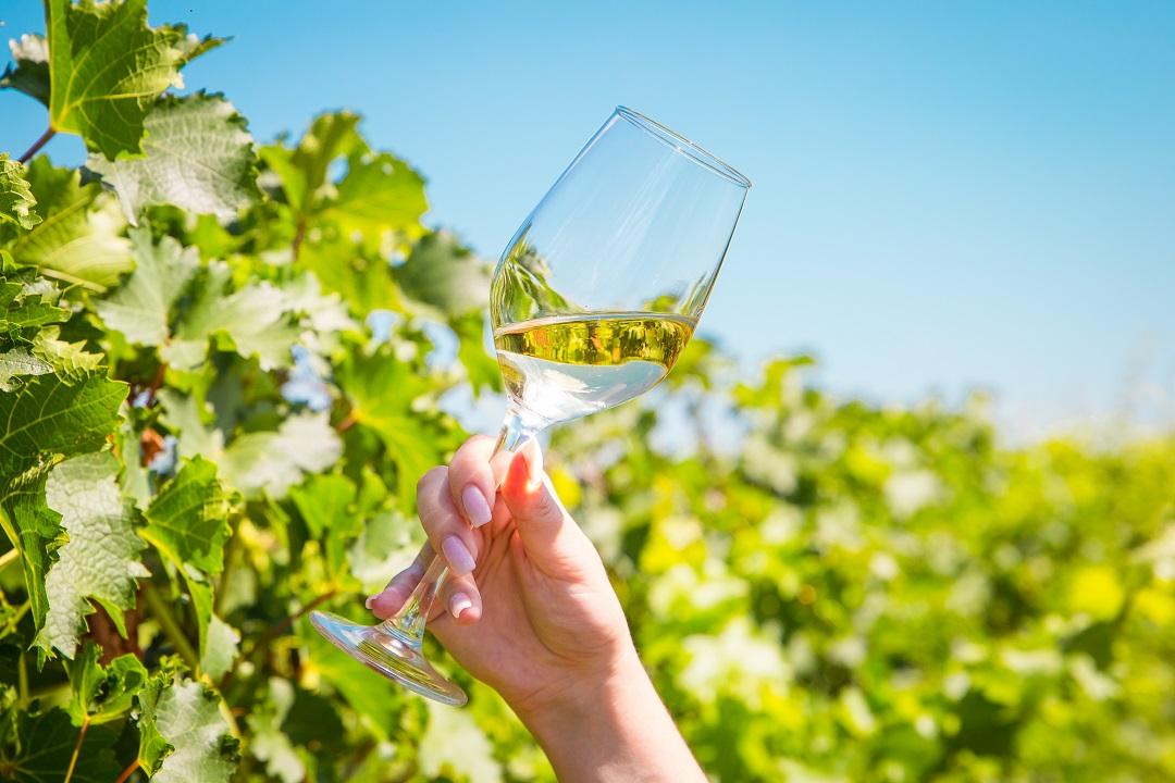 Wino w słonecznym blasku